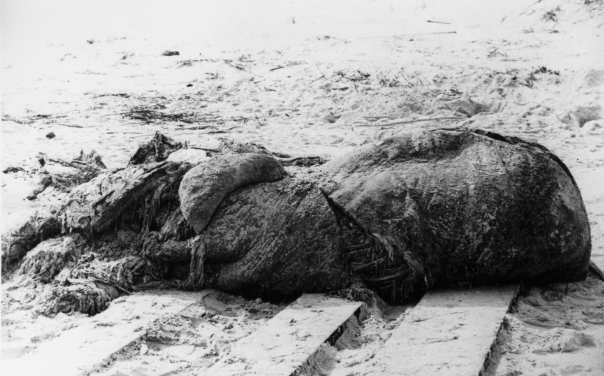 """a black and white photograph of """"the st. augustine monster"""" an unknown carcass washed up on to a beach."""