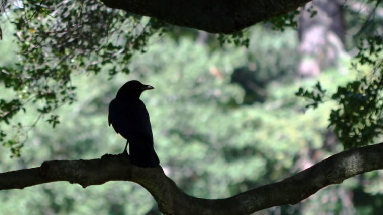 A raven sits on a gnarled tree branch.