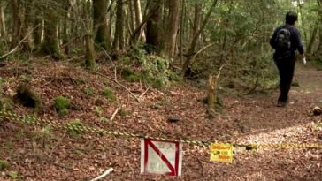 The Aokigahara forest