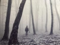 A lone figure stands in a misty forest with bent trees